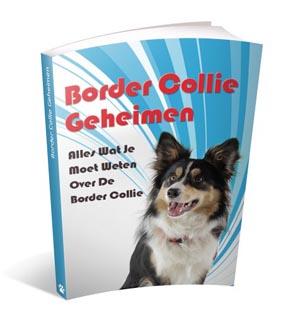Border Collie handboek