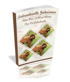 Labradoodle handboek